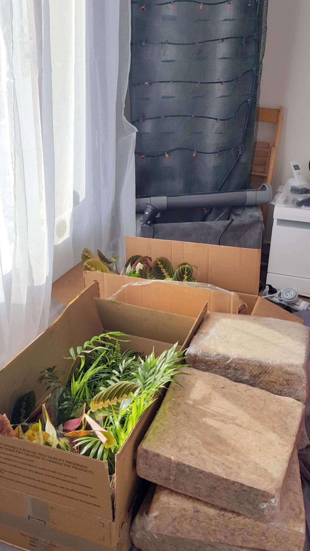 Plants et sphaigne 2 mars 17