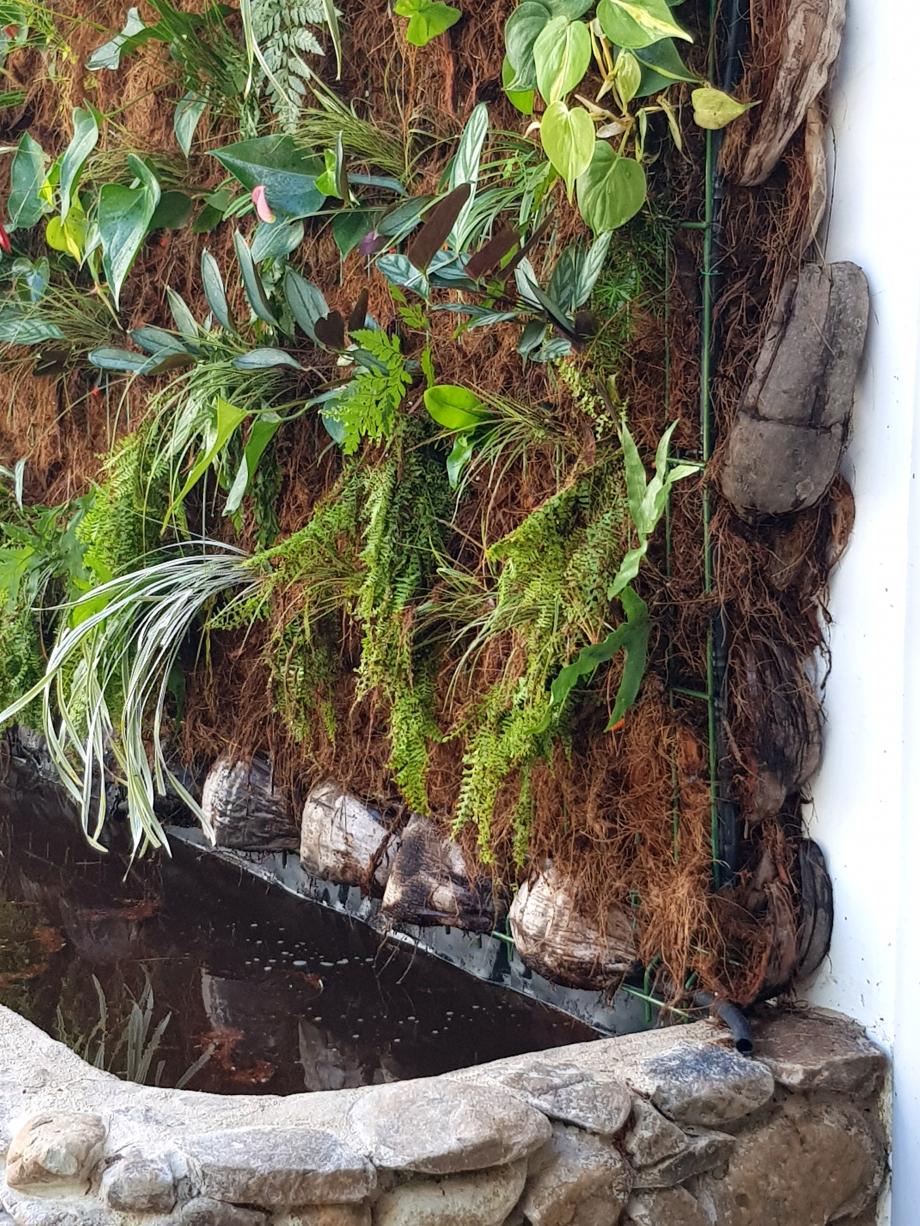 substrat mur Moorea