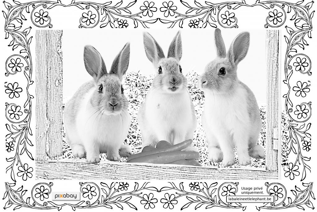C1 coloriage gratuit imprimer lapins carottes mignons