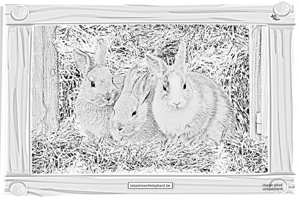 C2 coloriage gratuit imprimer lapins foin adorables