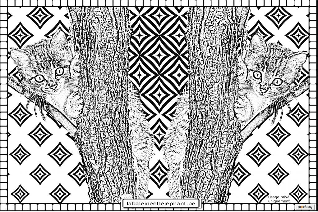 C6 coloriage gratuit imprimer chaton arbres