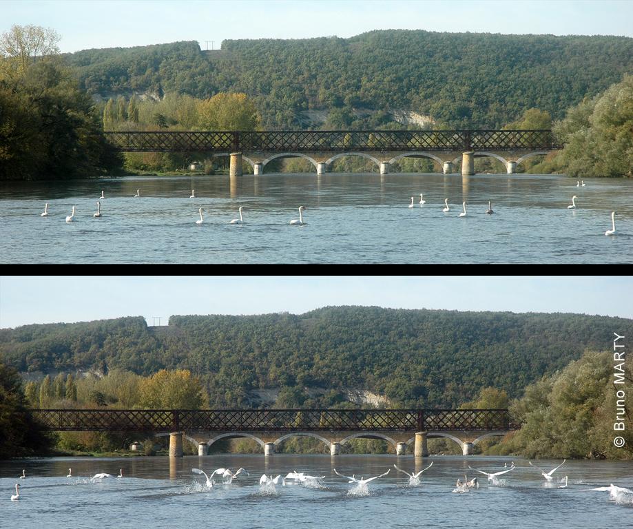 Pont du Garrit - Cygnes