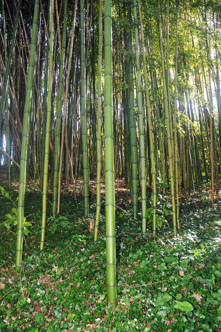 10 - Bambouseraie blog